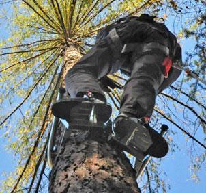 tree_climbing_accessories